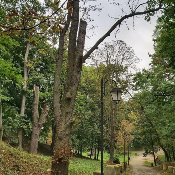 Galeria pielęgnacja terenów zielonych