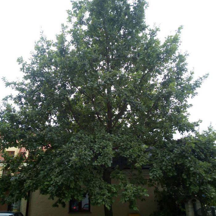 Galeria Drzewa w mieście