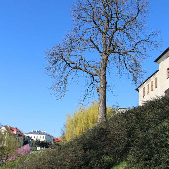 Galeria staromiejska uliczka na Podwale Dolne