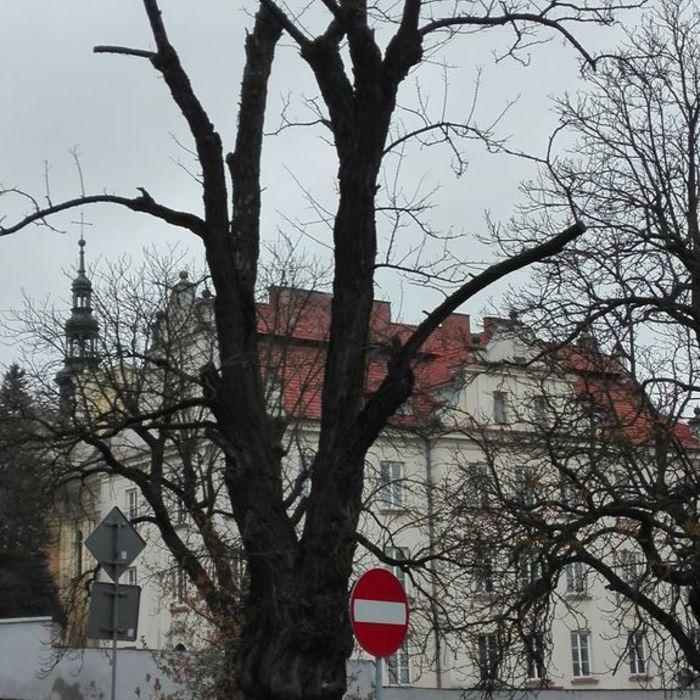 Galeria Skwer Niepodległości