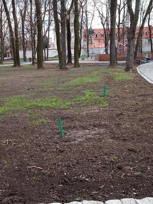 Galeria Prośba o niesadzenie drzew