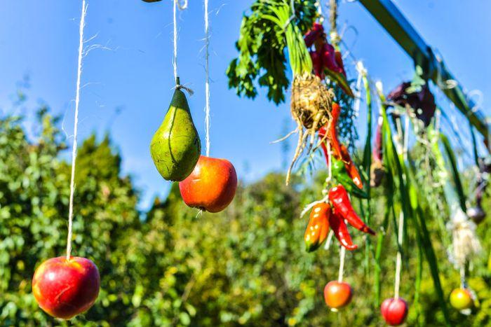 24. Wiszące na sznurkach owoce